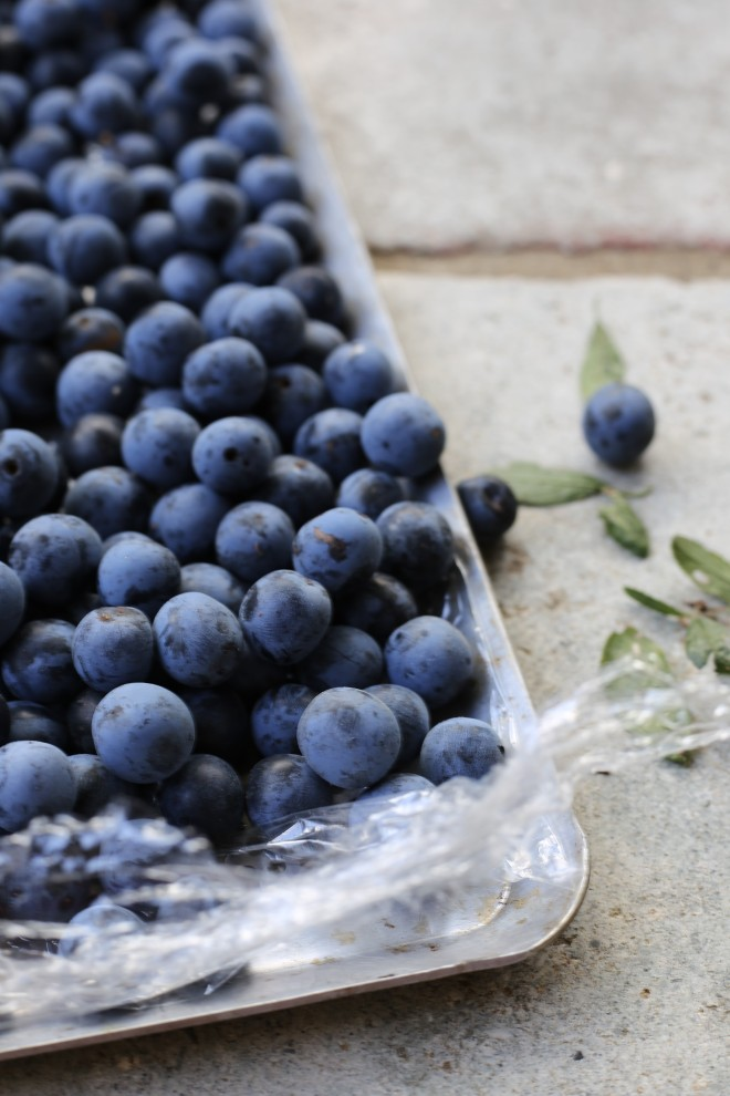 bletted sloes - open freezing
